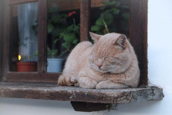 cat-690919_1280