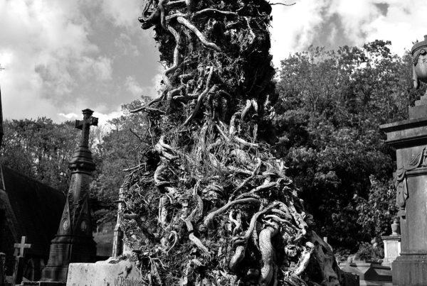 cemetery-458337_1920